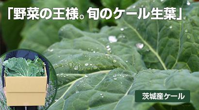 ケール生葉